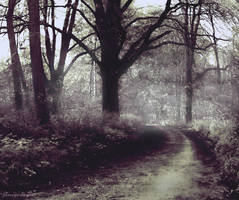 Grey Wood's Path by JanuarysDaughter