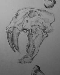 skull sketch by D4MNED-NONAME
