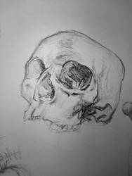 skull sketch 2 by D4MNED-NONAME
