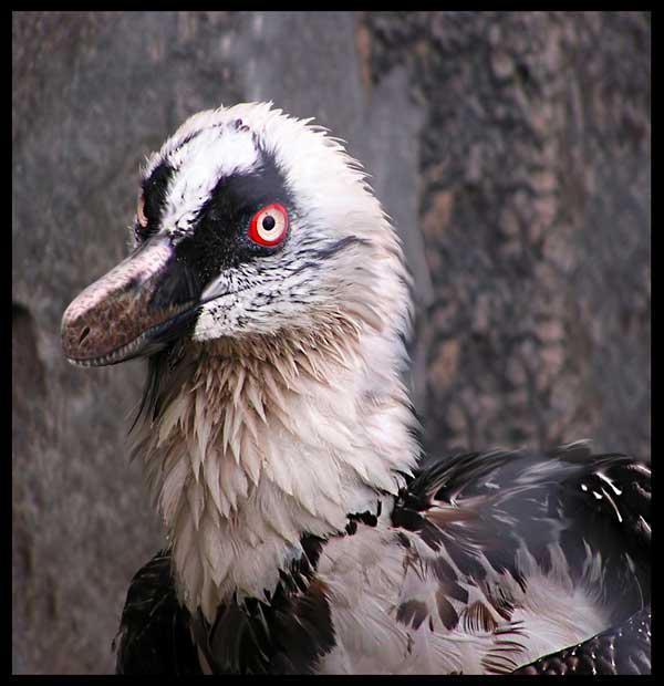 Velociraptor portrait by dustdevil