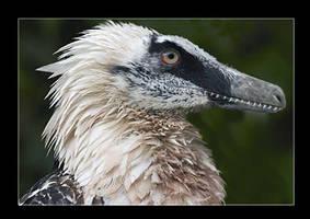 Velociraptor portrait 2 by dustdevil