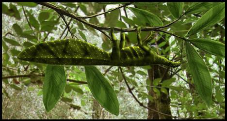 Hypuronector limnaios by dustdevil