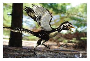 Archaeopteryx lithographica by dustdevil