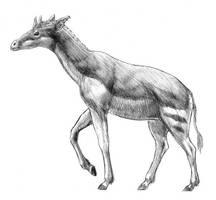 Palaeotragus by dustdevil