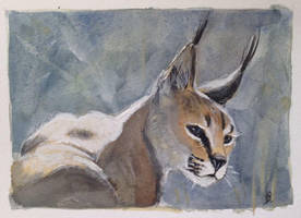 Caracal by dustdevil