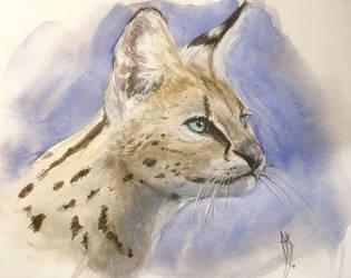 Serval by dustdevil