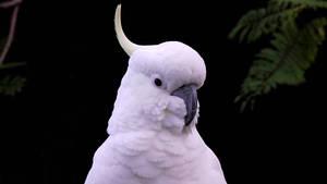 Who's a beautiful birdie? by BGai