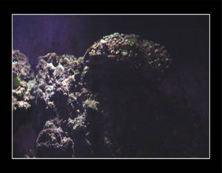 Reef by Moonlight by soluscado
