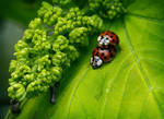 ladybug rodeo by agaillard