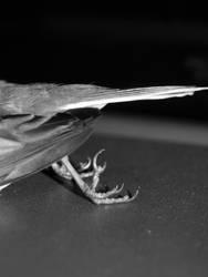 free bird. by ThePrayerPosition