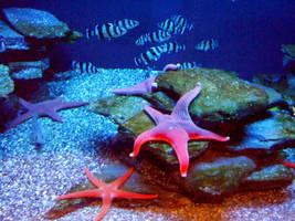 The Laziest Starfish by InkTheEchidna