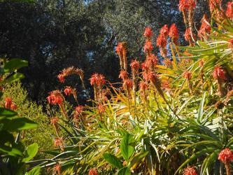The Huntington - Orange Flowers by InkTheEchidna