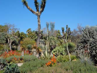 The Huntington - Cacti by InkTheEchidna