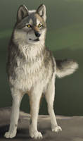 Introduction - Wolf Detail by WindSeeker