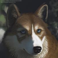 Gift for WolfFriend by WindSeeker