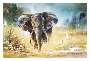 Watercolor Painting - Elephant by Abstractmusiq