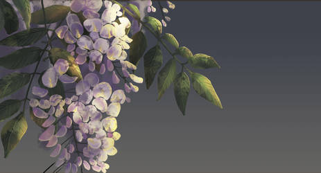 Wisteria by chateaugrief
