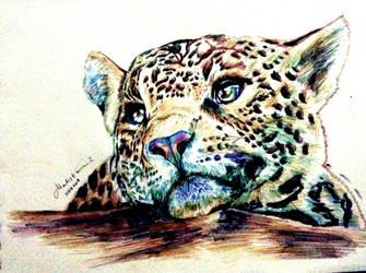 Wondering Leopard by AtListana