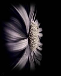 Flower 1 by Fleurine-Retore