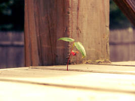 Little Leaf by Colliedale