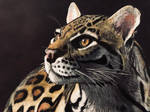 Ocelot in Colored Pencil on Black Paper by SalivaAssassin