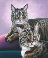 Double Cat Portrait by NewAgeTraveller