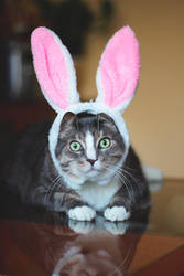 My lovely bunny by Amaimosha