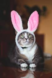 My lovely bunny II by Amaimosha