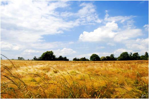 Dans les champs by Hieronimus-art