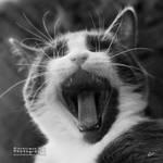 Yawnn or roaarr ? by Hieronimus-art