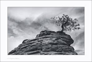 Tree by ESafian