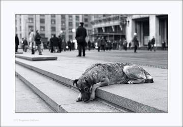Dog by ESafian