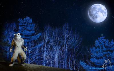 Nighthowler [Wallpaper] by FotoFurNL