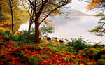 Beautiful Autumn Forest and Lake Scenery Wallpaper by ROGUE-RATTLESNAKE
