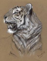 Tiger by Vermin-Star