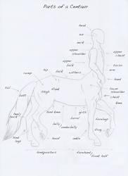 Parts of a Centaur by Quaymius