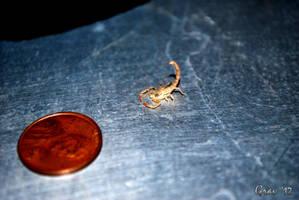 Tiny Scorpion Shell by Ryan-TheGrav-Berry