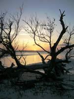Driftwood - Cuba by amber-lake