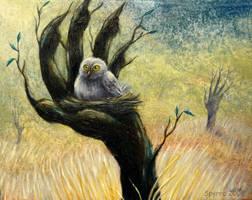 Owls nest by Spyrre