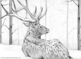 Deer in snow by Qwiven