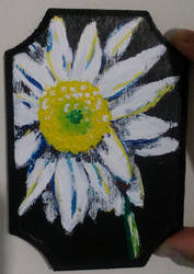 Daisy by serekan