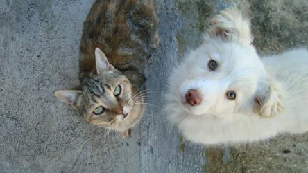 Cat and Dog by lo-scrigno-di-connie