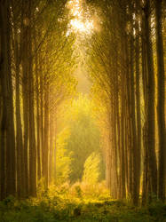 Light at the end of the forest... by jaco353