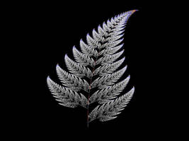 White Fern by cf33092