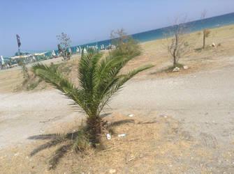 Palm tree on the roadside by LW97