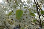 White Flower Bundle by pairofbrowneyes