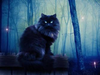 Black Cat by OrderOfShadows