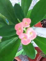 little pinky by littlebluewildfire