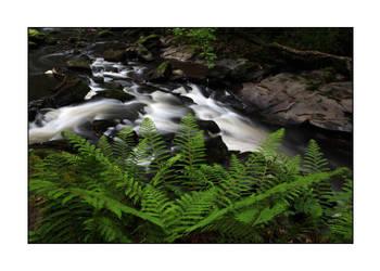 Riverside ferns by PicTd