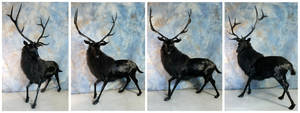 The Black Stag by WeirdCityTaxidermy
